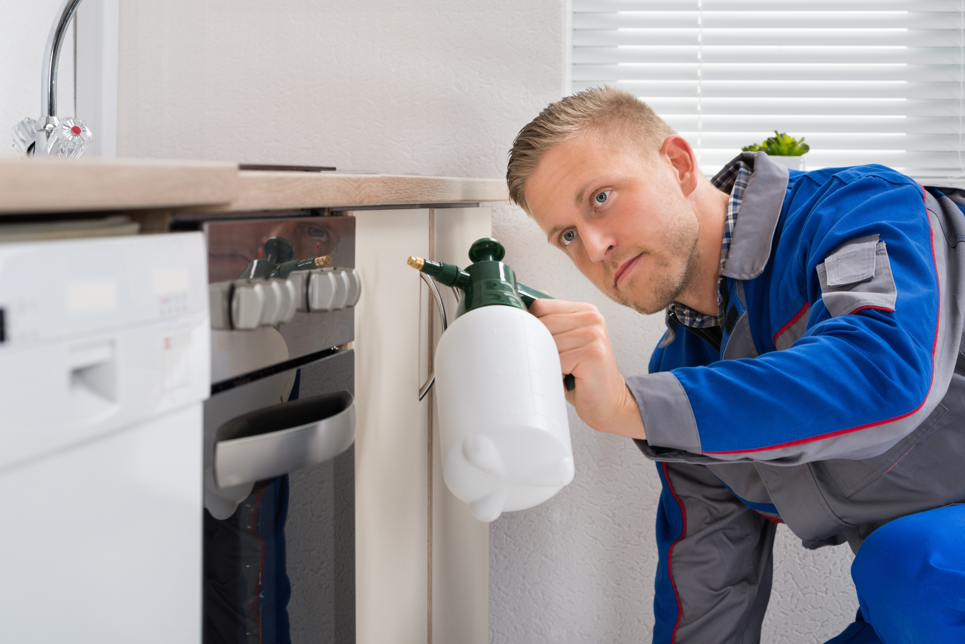 Pest Inspection, Pest Control in Brentford, Kew Bridge, TW8. Call Now 020 8166 9746
